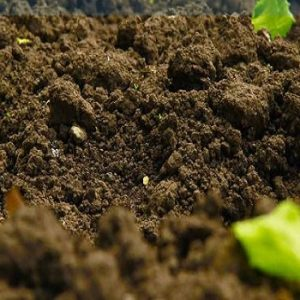Digging up the truth on excess soil management